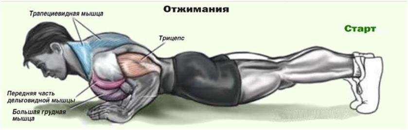При желании накачать мышцы эффективный минимум подтягиваний или отжиманий О
